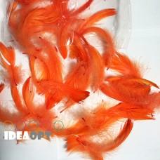 Пір'я помаранчеві (15гр +-4гр)